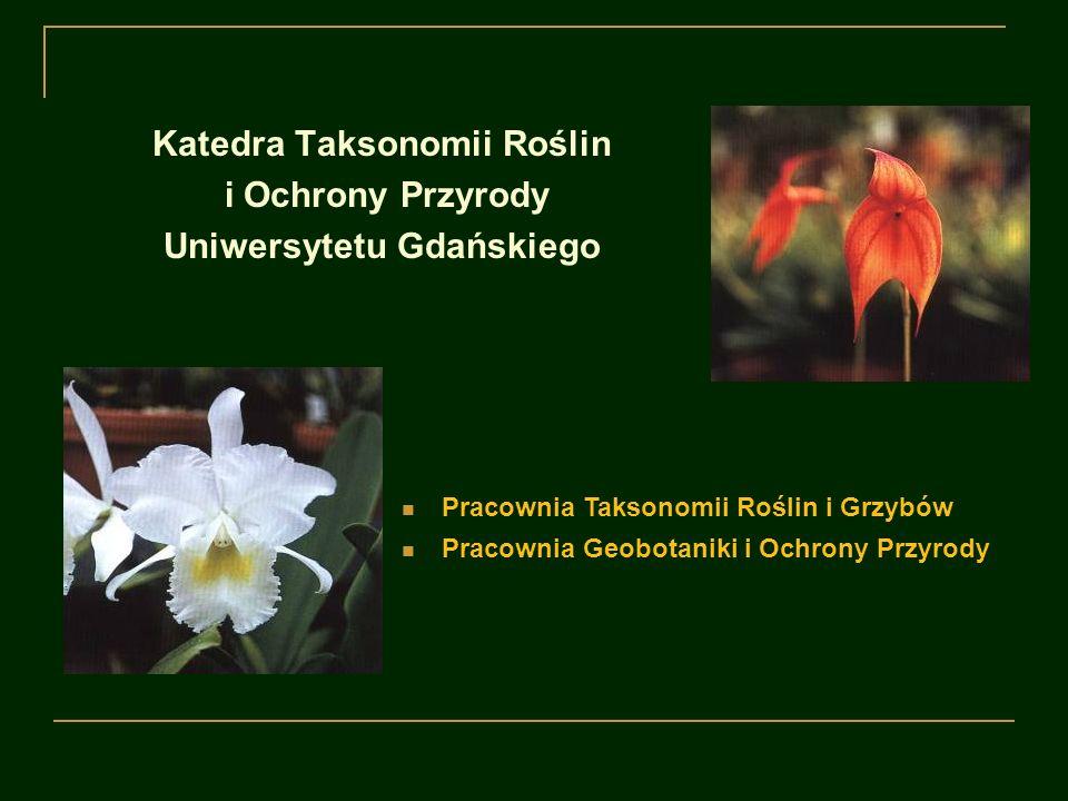 Katedra Taksonomii Roślin i Ochrony Przyrody Uniwersytetu Gdańskiego rząd Orchidales w wybranych obszarach tropikalnych roślinność naczyniowa Pomorza taksonomia i ekologia porostów oraz grzybów naporostowych Obszary zainteresowań:
