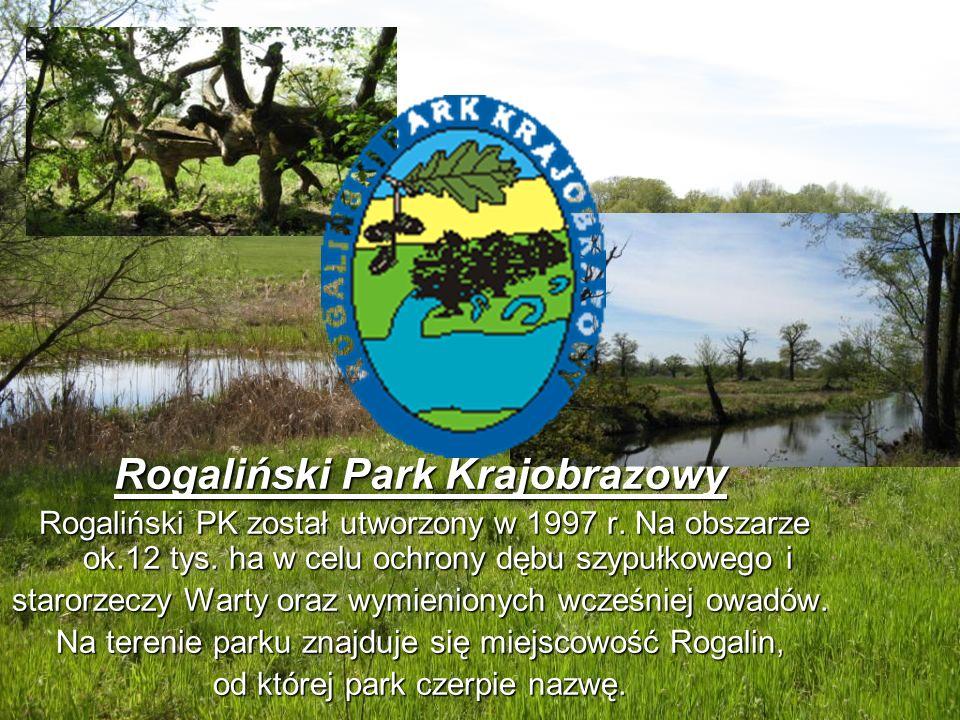 Rogaliński Park Krajobrazowy Rogaliński PK został utworzony w 1997 r. Na obszarze ok.12 tys. ha w celu ochrony dębu szypułkowego i Rogaliński PK zosta