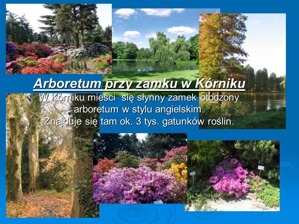 Arboretum przy zamku w Kórniku W Kórniku mieści się słynny zamek otoczony arboretum w stylu angielskim. Znajduje się tam ok. 3 tys. gatunków roślin.
