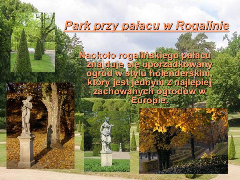 Naokoło rogalińskiego pałacu znajduje się uporządkowany ogród w stylu holenderskim, który jest jednym z najlepiej zachowanych ogrodów w Europie. Park