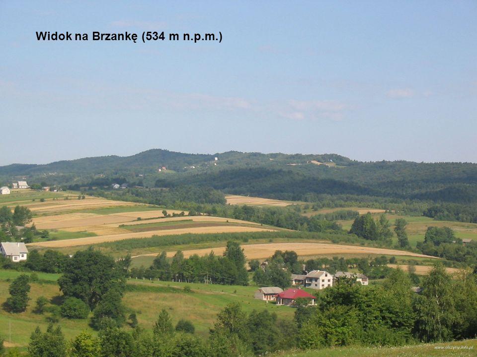 Widok na Brzankę (534 m n.p.m.)