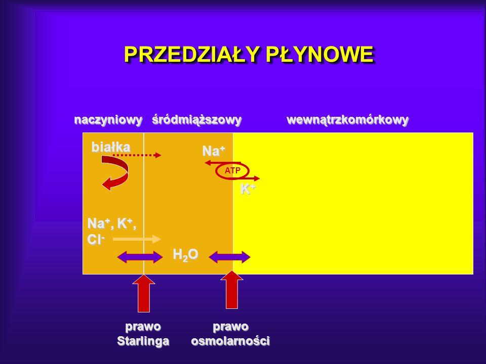 PRZEDZIAŁY PŁYNOWE białka Na +, K +, Cl - H2OH2OH2OH2O Na + K+K+K+K+ prawo Starlinga prawo osmolarności naczyniowy śródmiąższowy wewnątrzkomórkowy nac