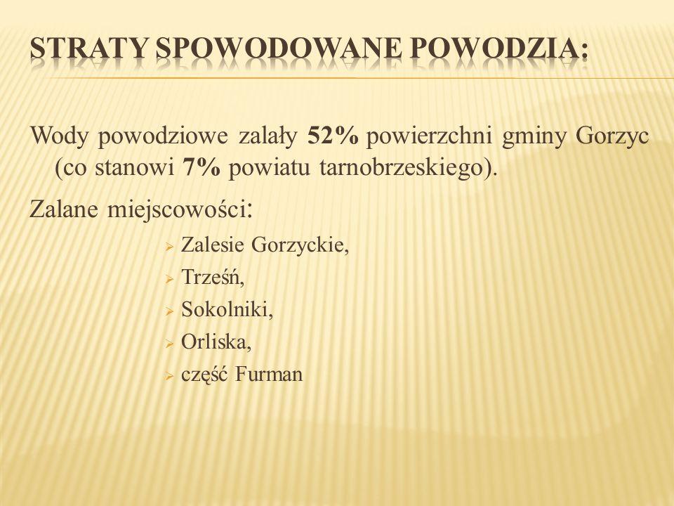 Wody powodziowe zalały 52% powierzchni gminy Gorzyc (co stanowi 7% powiatu tarnobrzeskiego). Zalane miejscowości : Zalesie Gorzyckie, Trześń, Sokolnik