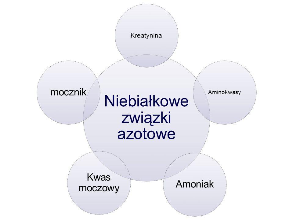Niebiałkowe związki azotowe Kreatynina Aminokwasy Amoniak Kwas moczowy mocznik