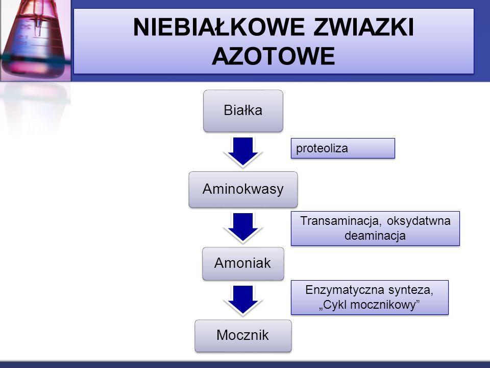 NIEBIAŁKOWE ZWIAZKI AZOTOWE Białka Aminokwasy Amoniak Mocznik proteoliza Transaminacja, oksydatwna deaminacja Enzymatyczna synteza, Cykl mocznikowy