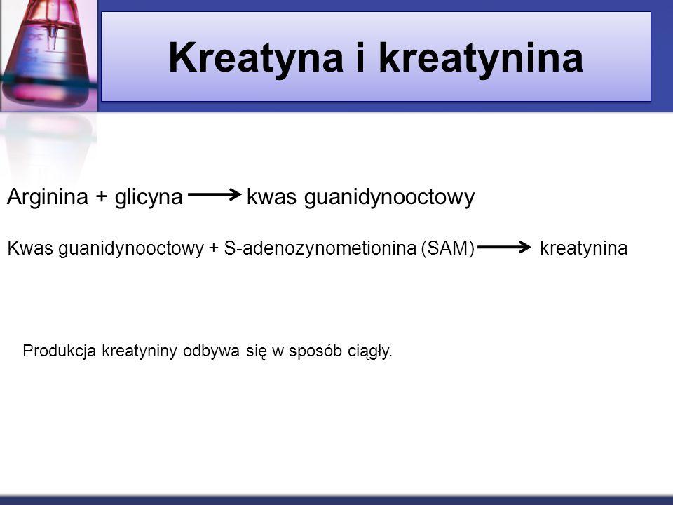 Kreatyna i kreatynina Arginina + glicyna kwas guanidynooctowy Kwas guanidynooctowy + S-adenozynometionina (SAM) kreatynina Produkcja kreatyniny odbywa