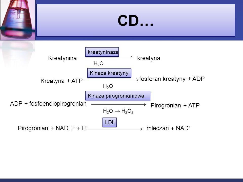CD… Kreatyninakreatyna kreatyninaza H2OH2O Kreatyna + ATP Kinaza kreatyny fosforan kreatyny + ADP H2OH2O ADP + fosfoenolopirogronian Kinaza pirogronia