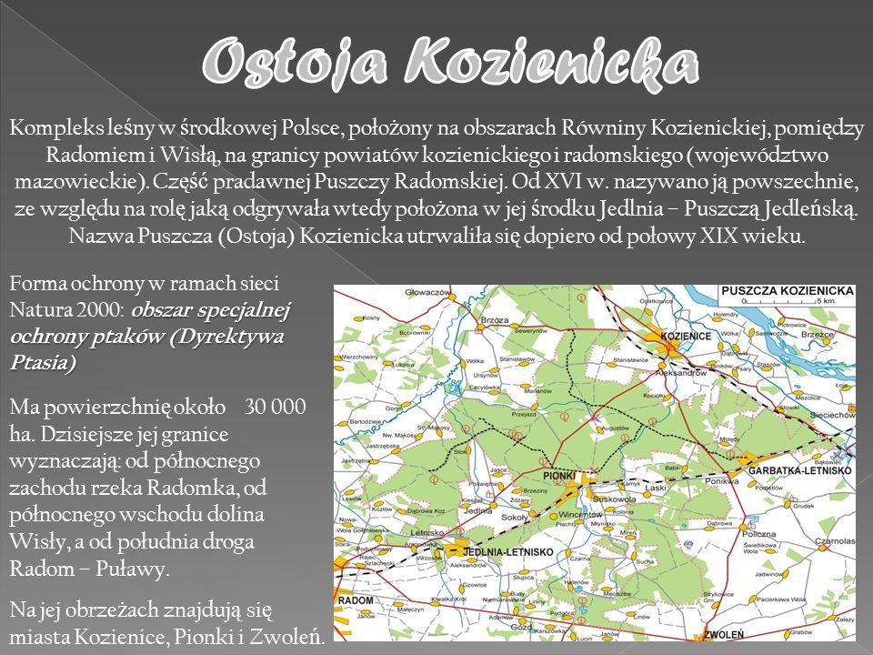 Kompleks le ś ny w ś rodkowej Polsce, poło ż ony na obszarach Równiny Kozienickiej, pomi ę dzy Radomiem i Wisł ą, na granicy powiatów kozienickiego i