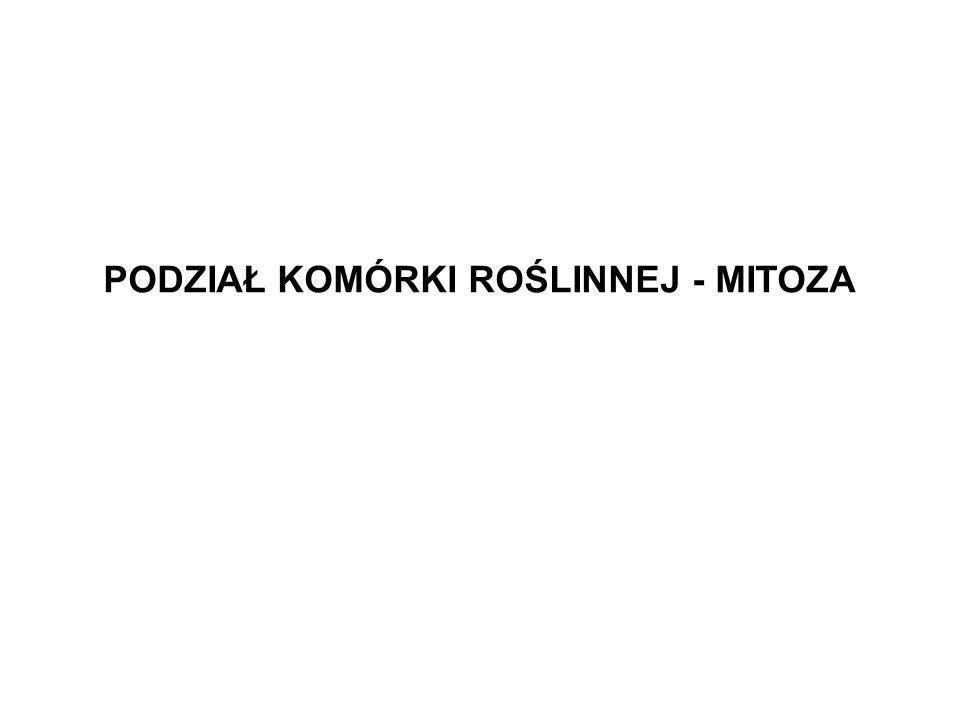 PODZIAŁ KOMÓRKI ROŚLINNEJ - MITOZA