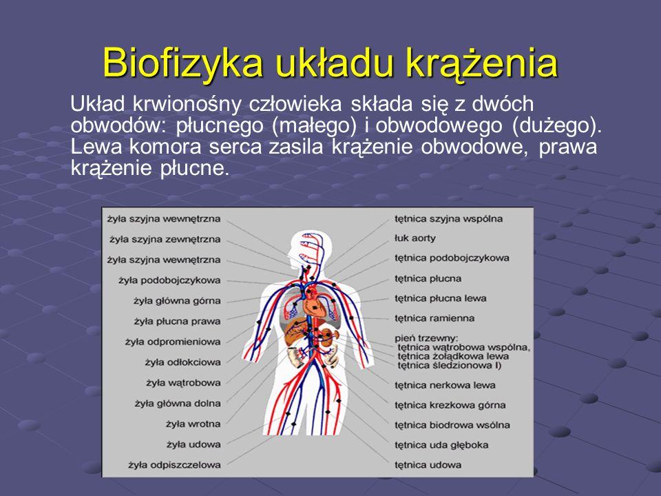 Biofizyka układu krążenia Układ krwionośny człowieka składa się z dwóch obwodów: płucnego (małego) i obwodowego (dużego). Lewa komora serca zasila krą