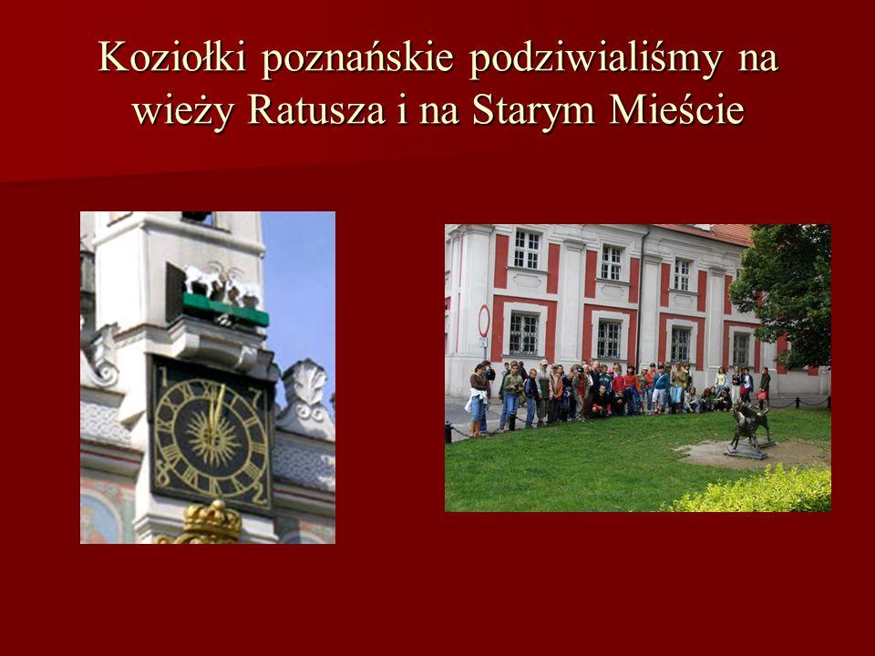 Koziołki poznańskie podziwialiśmy na wieży Ratusza i na Starym Mieście