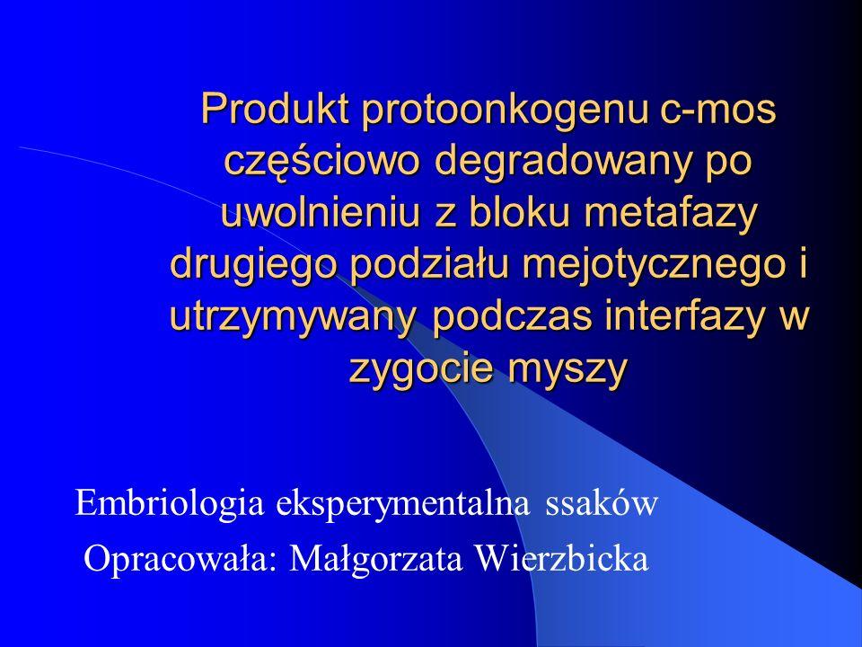 Produkt protoonkogenu c-mos częściowo degradowany po uwolnieniu z bloku metafazy drugiego podziału mejotycznego i utrzymywany podczas interfazy w zygo