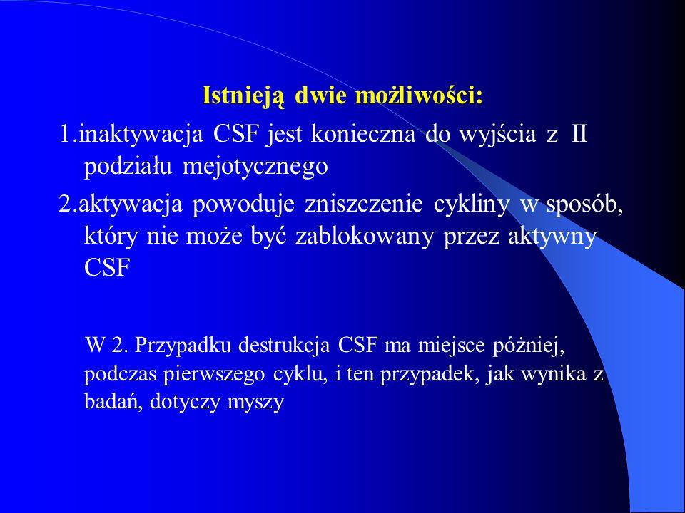 Istnieją dwie możliwości: 1.inaktywacja CSF jest konieczna do wyjścia z II podziału mejotycznego 2.aktywacja powoduje zniszczenie cykliny w sposób, kt