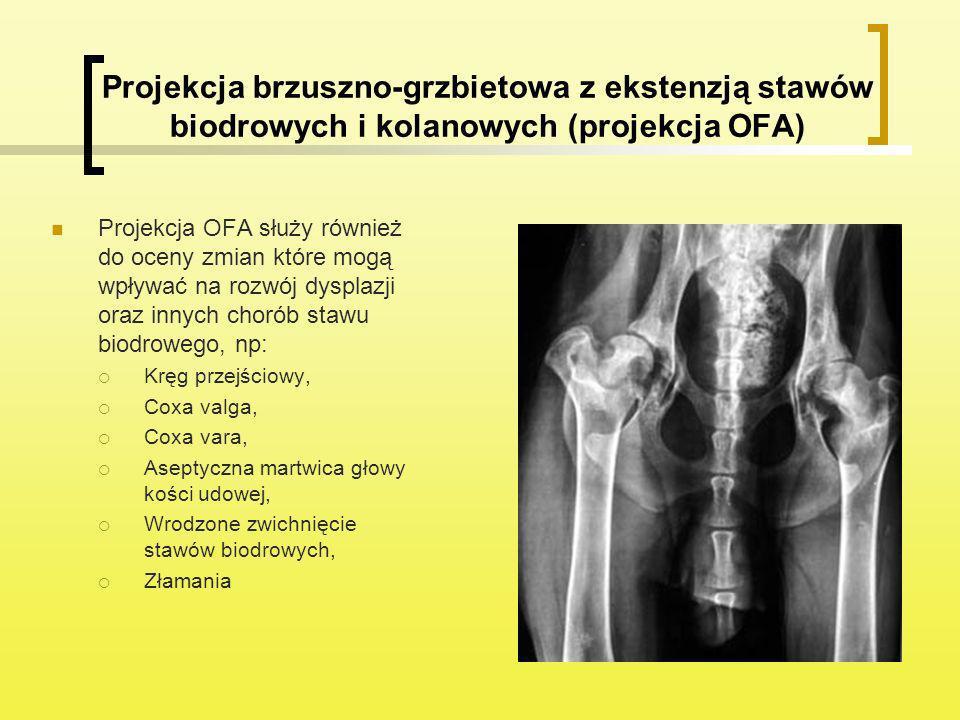 Projekcja brzuszno-grzbietowa z ekstenzją stawów biodrowych i kolanowych (projekcja OFA) Projekcja OFA służy również do oceny zmian które mogą wpływać