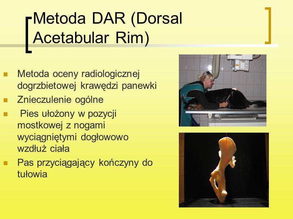 Metoda DAR (Dorsal Acetabular Rim) Metoda oceny radiologicznej dogrzbietowej krawędzi panewki Znieczulenie ogólne Pies ułożony w pozycji mostkowej z n