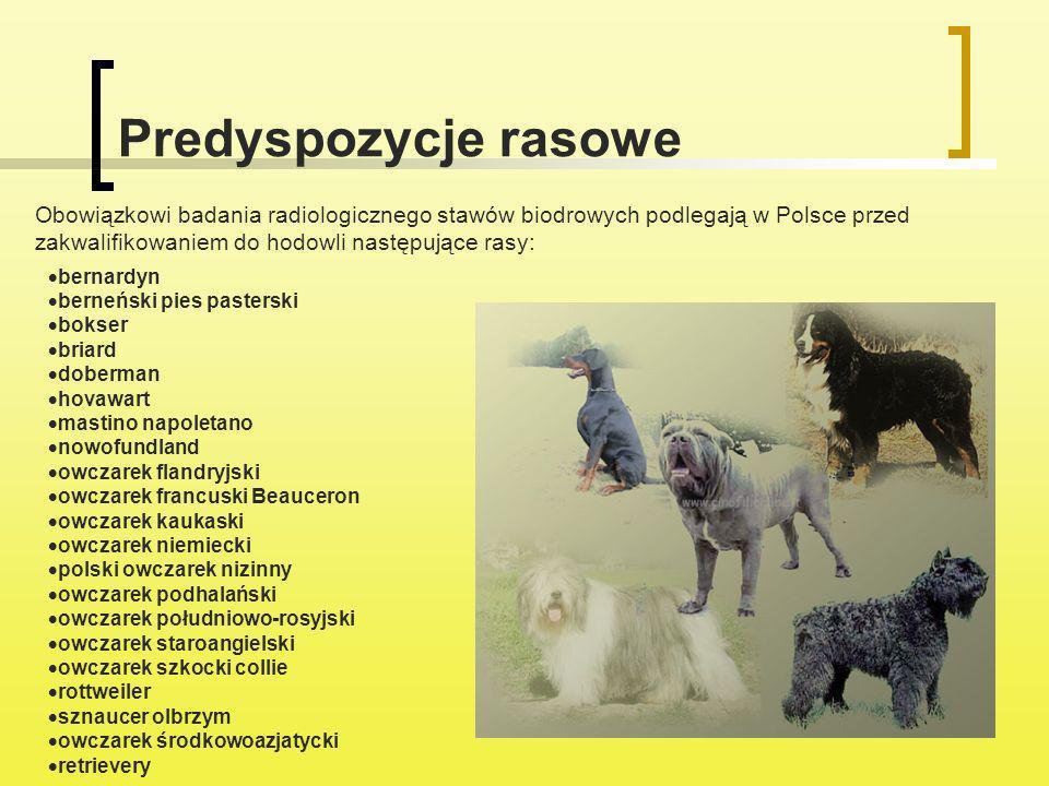 Predyspozycje rasowe bernardyn berneński pies pasterski bokser briard doberman hovawart mastino napoletano nowofundland owczarek flandryjski owczarek