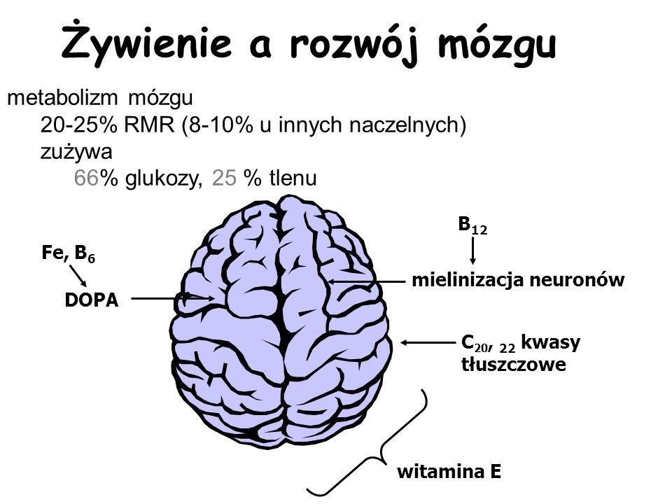 Żywienie a rozwój mózgu mielinizacja neuronów B 12 C 20, 22 kwasy tłuszczowe witamina E DOPA Fe, B 6 metabolizm mózgu 20-25% RMR (8-10% u innych nacze