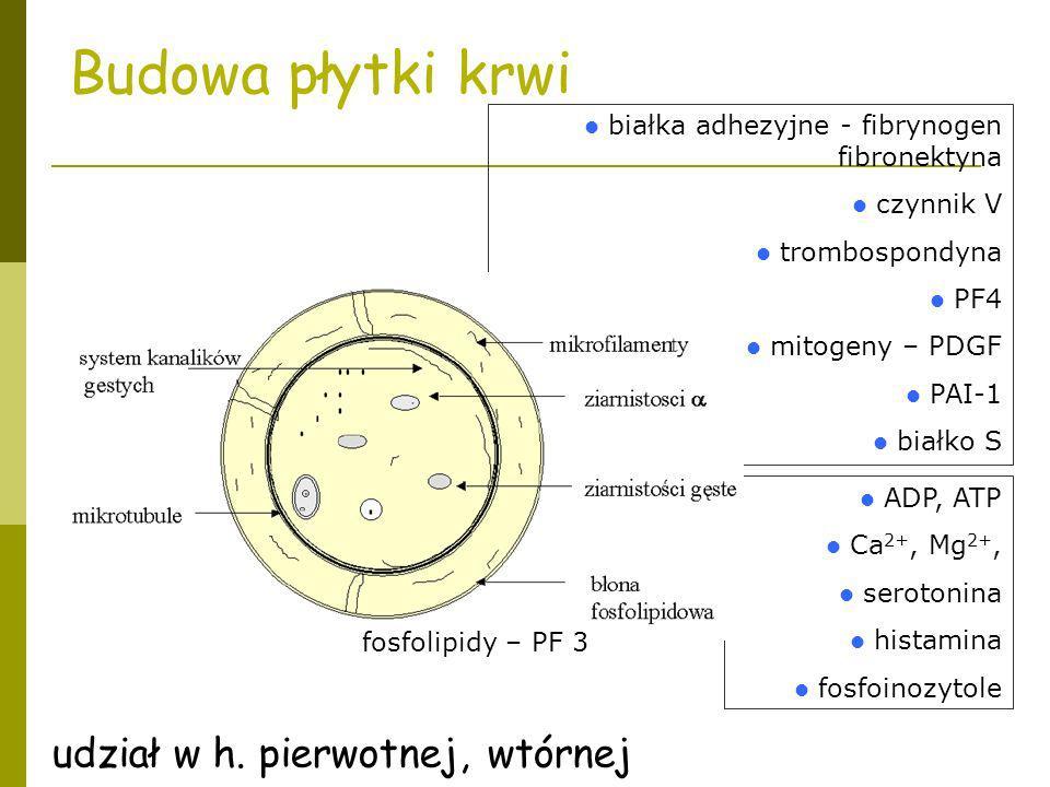 białka adhezyjne - fibrynogen fibronektyna czynnik V trombospondyna PF4 mitogeny – PDGF PAI-1 białko S ADP, ATP Ca 2+, Mg 2+, serotonina histamina fos