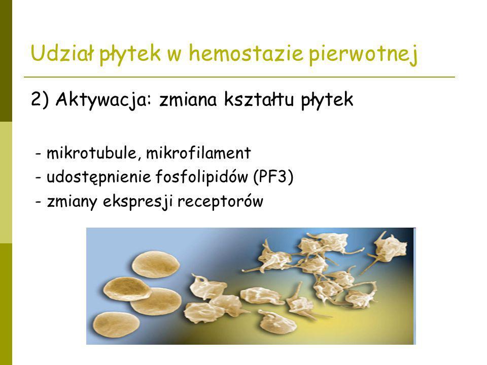 Udział płytek w hemostazie pierwotnej 2) Aktywacja: zmiana kształtu płytek - mikrotubule, mikrofilament - udostępnienie fosfolipidów (PF3) - zmiany ek