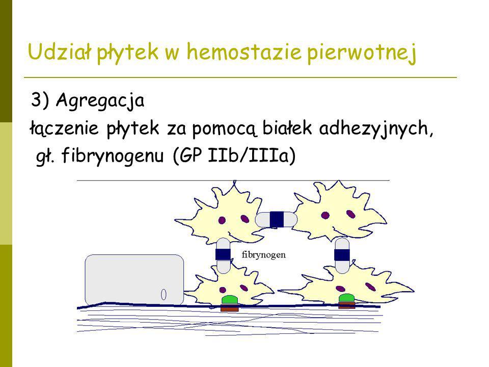 Udział płytek w hemostazie pierwotnej 3) Agregacja łączenie płytek za pomocą białek adhezyjnych, gł. fibrynogenu (GP IIb/IIIa)