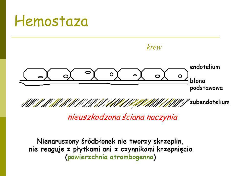 endotelium błona podstawowa subendotelium krew Nienaruszony śródbłonek nie tworzy skrzeplin, nie reaguje z płytkami ani z czynnikami krzepnięcia (powi