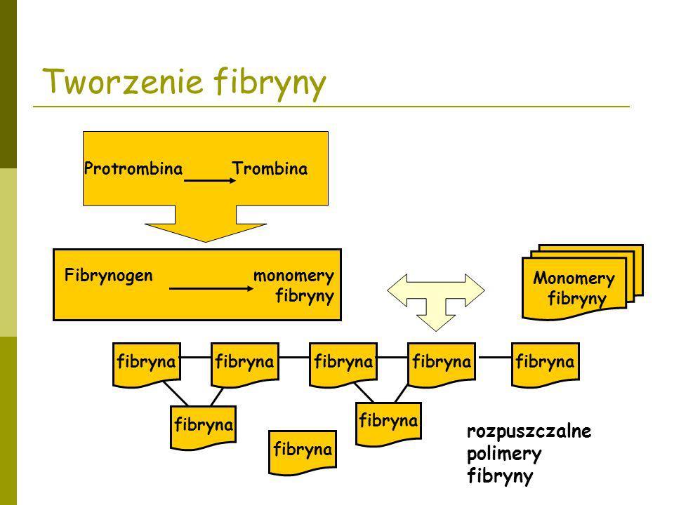 Monomery fibryny Protrombina Trombina Fibrynogen monomery fibryny rozpuszczalne polimery fibryny Tworzenie fibryny fibryna