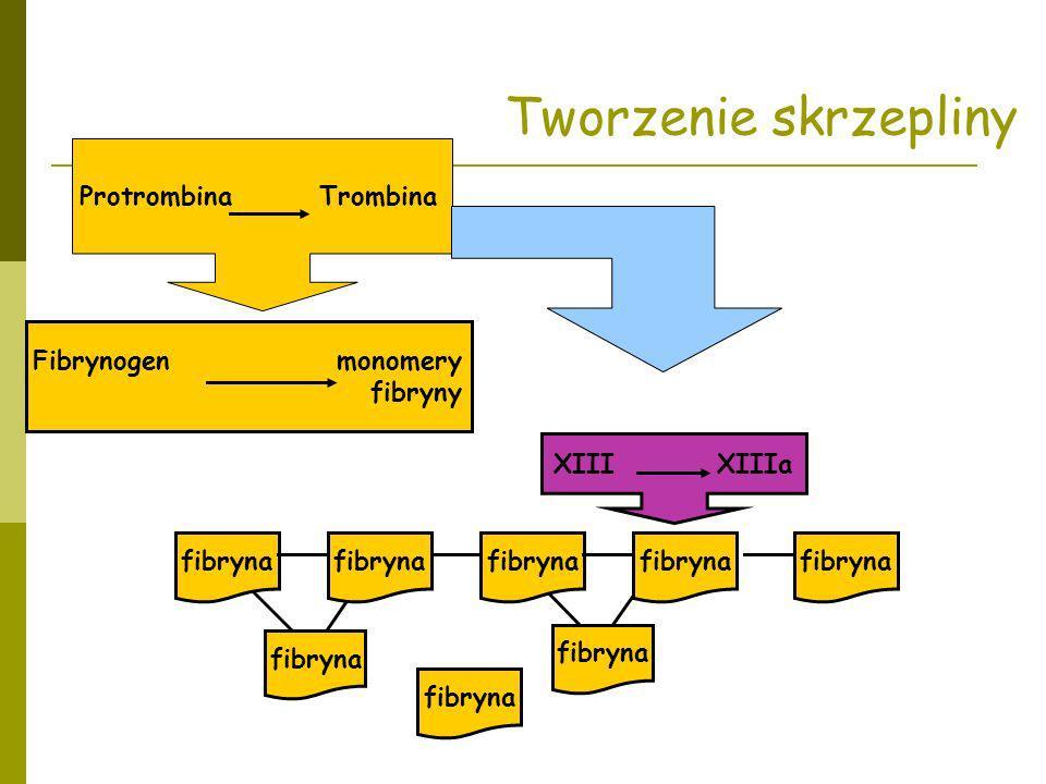 Protrombina Trombina Fibrynogen monomery fibryny Tworzenie skrzepliny XIII XIIIa fibryna