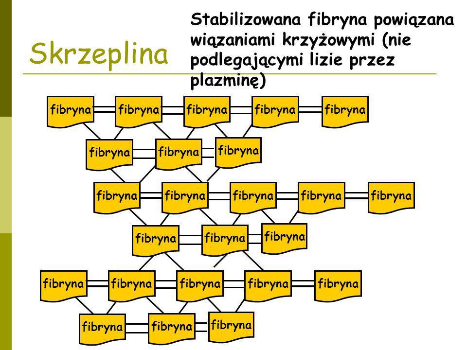 Stabilizowana fibryna powiązana wiązaniami krzyżowymi (nie podlegającymi lizie przez plazminę) Skrzeplina fibryna