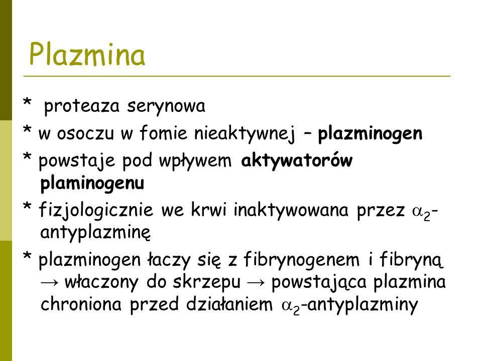 Plazmina * proteaza serynowa * w osoczu w fomie nieaktywnej – plazminogen * powstaje pod wpływem aktywatorów plaminogenu * fizjologicznie we krwi inak