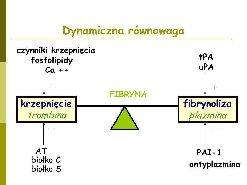 czynniki krzepnięcia fosfolipidy Ca ++ AT białko C białko S + _ tPA uPA PAI-1 antyplazmina + _ fibrynoliza plazmina FIBRYNA Dynamiczna równowaga krzep