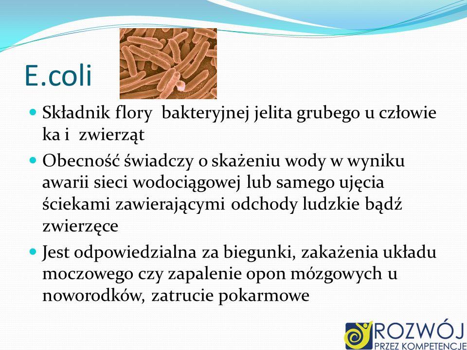 E.coli Składnik flory bakteryjnej jelita grubego u człowie ka i zwierząt Obecność świadczy o skażeniu wody w wyniku awarii sieci wodociągowej lub samego ujęcia ściekami zawierającymi odchody ludzkie bądź zwierzęce Jest odpowiedzialna za biegunki, zakażenia układu moczowego czy zapalenie opon mózgowych u noworodków, zatrucie pokarmowe