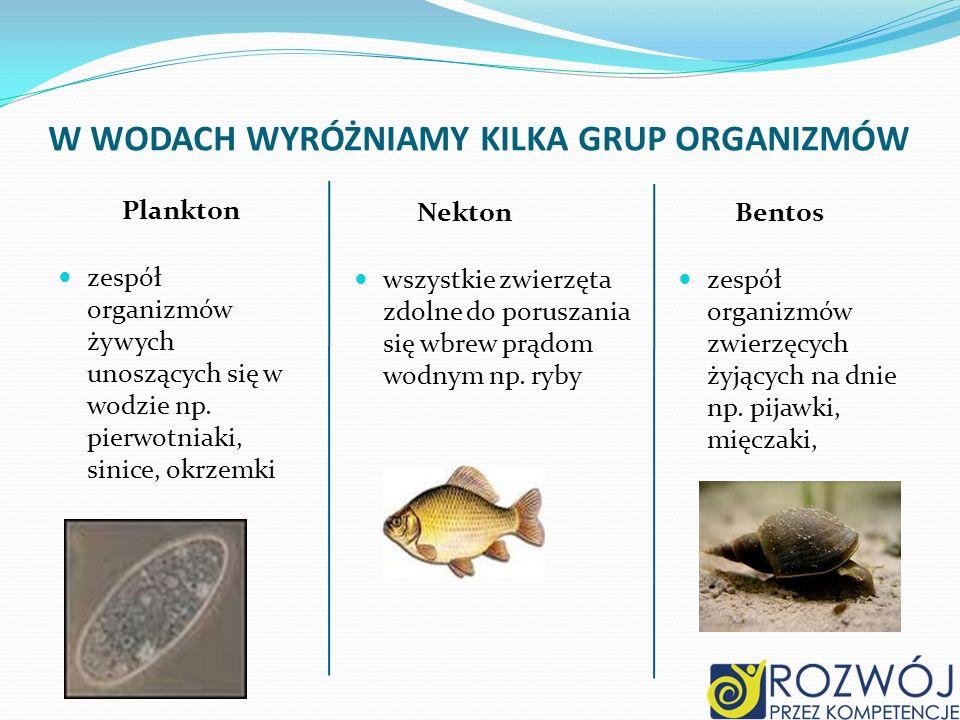 Plankton zespół organizmów żywych unoszących się w wodzie np.