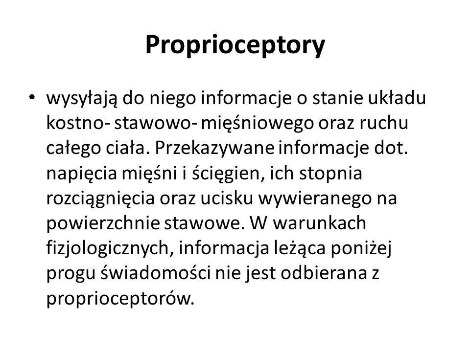 Proprioceptory wysyłają do niego informacje o stanie układu kostno- stawowo- mięśniowego oraz ruchu całego ciała.
