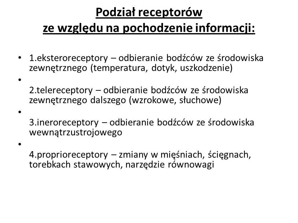 Podział receptorów ze względu na pochodzenie informacji: 1.eksteroreceptory – odbieranie bodźców ze środowiska zewnętrznego (temperatura, dotyk, uszkodzenie) 2.telereceptory – odbieranie bodźców ze środowiska zewnętrznego dalszego (wzrokowe, słuchowe) 3.ineroreceptory – odbieranie bodźców ze środowiska wewnątrzustrojowego 4.proprioreceptory – zmiany w mięśniach, ścięgnach, torebkach stawowych, narzędzie równowagi