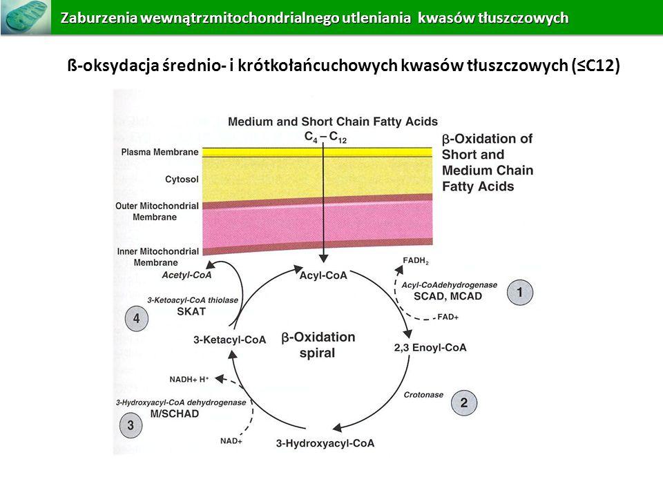 ß-oksydacja średnio- i krótkołańcuchowych kwasów tłuszczowych (C12) Zaburzeniawewnątrzmitochondrialnego utleniania kwasów tłuszczowych Zaburzenia wewn
