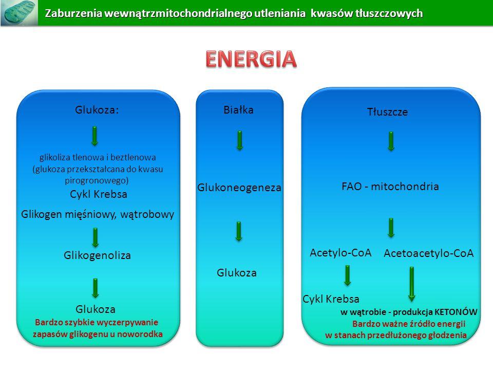 Białka Glukoneogeneza Glukoza Glukoza: glikoliza tlenowa i beztlenowa (glukoza przekształcana do kwasu pirogronowego) Cykl Krebsa Glikogen mięśniowy,