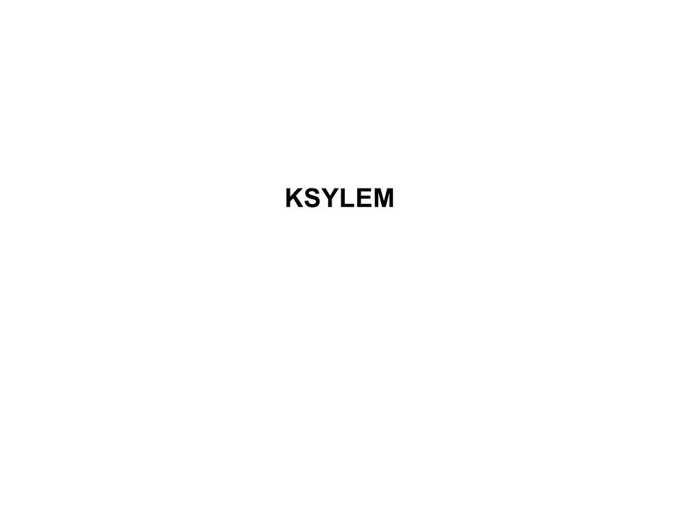 KSYLEM