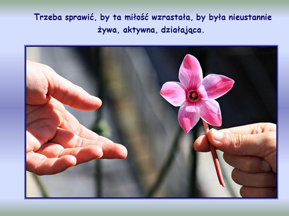Nie wystarczy w chwili olśnienia zrozumieć przykazania miłości bliźniego, nie wystarczy też nawet doświadczać tej miłości z zachwytem i poddawać się jej, jak to bywa u progu nawrócenia na Ewangelię.