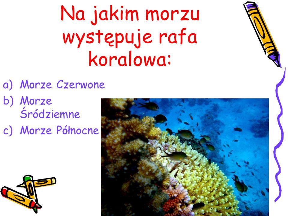 Na jakim morzu występuje rafa koralowa: a)Morze Czerwone b)Morze Śródziemne c)Morze Północne