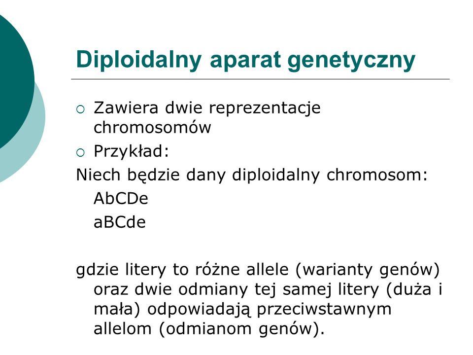 Diploidalny aparat genetyczny Zawiera dwie reprezentacje chromosomów Przykład: Niech będzie dany diploidalny chromosom: AbCDe aBCde gdzie litery to ró