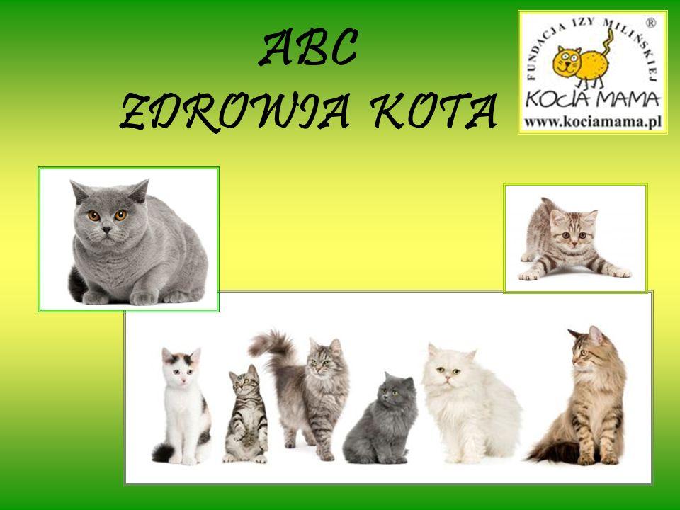 ZNACZENIE TERENU Koty prowadzą osiadły tryb życia wykazując duże przywiązane do własnego kawałka ziemi.