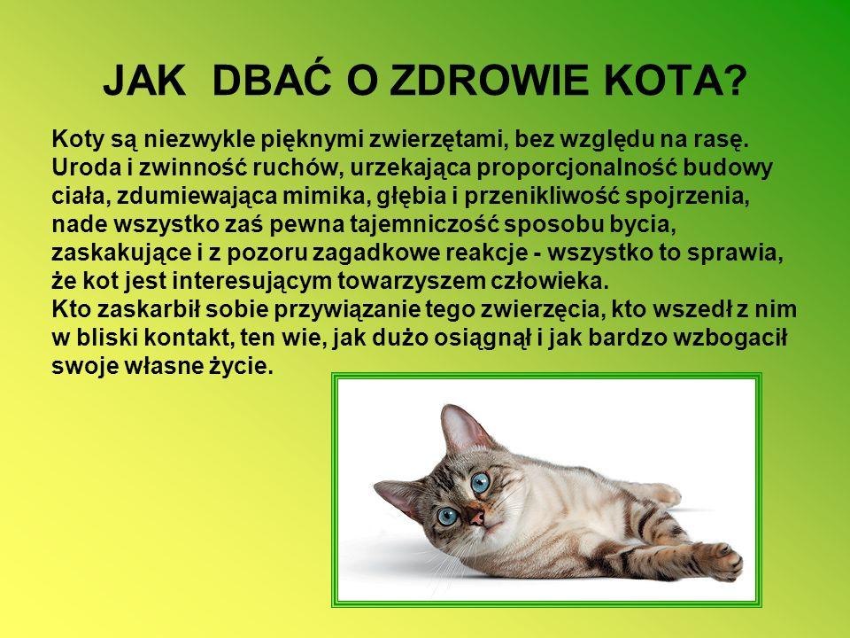 JAK DBAĆ O ZDROWIE KOTA.Koty są niezwykle pięknymi zwierzętami, bez względu na rasę.