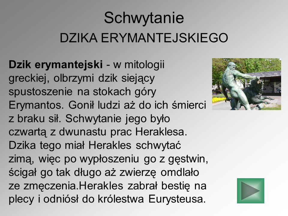 Schwytanie DZIKA ERYMANTEJSKIEGO Dzik erymantejski - w mitologii greckiej, olbrzymi dzik siejący spustoszenie na stokach góry Erymantos. Gonił ludzi a