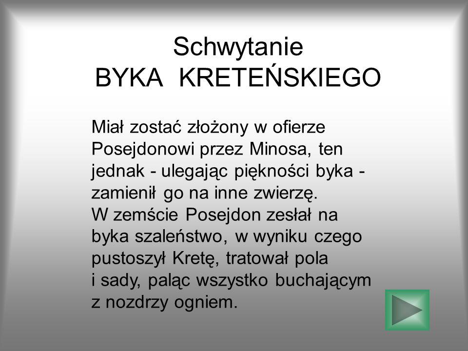 Schwytanie BYKA KRETEŃSKIEGO Miał zostać złożony w ofierze Posejdonowi przez Minosa, ten jednak - ulegając piękności byka - zamienił go na inne zwierzę.