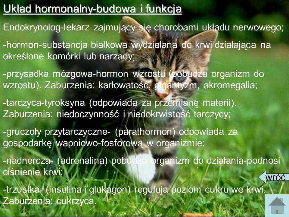 Układ hormonalny-budowa i funkcja Endokrynolog-lekarz zajmujący się chorobami układu nerwowego; -hormon-substancja białkowa wydzielana do krwi działaj