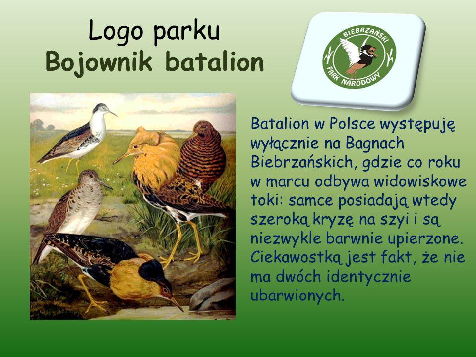 Logo parku Bojownik batalion Batalion w Polsce występuję wyłącznie na Bagnach Biebrzańskich, gdzie co roku w marcu odbywa widowiskowe toki: samce posiadają wtedy szeroką kryzę na szyi i są niezwykle barwnie upierzone.