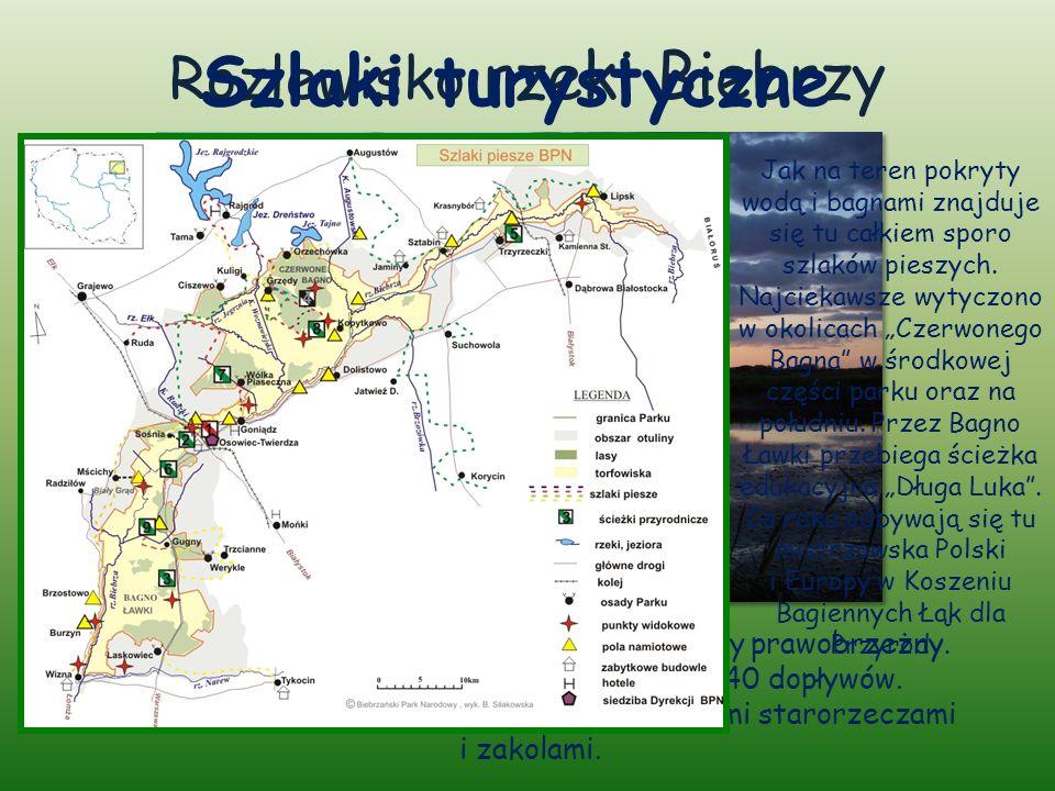 Rozlewisko rzeki Biebrzy Główną rzeką doliny jest Biebrza – największy prawobrzeżny dopływ Narwi, który zbiera wody z blisko 40 dopływów.