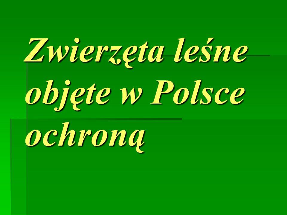 Zwierzęta leśne objęte w Polsce ochroną
