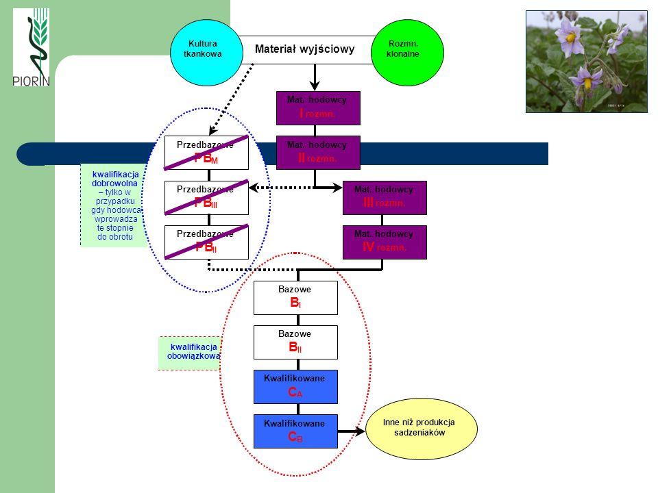 kwalifikacja obowiązkowa kwalifikacja dobrowolna – tylko w przypadku gdy hodowca wprowadza te stopnie do obrotu Przedbazowe PB II Przedbazowe PB III P