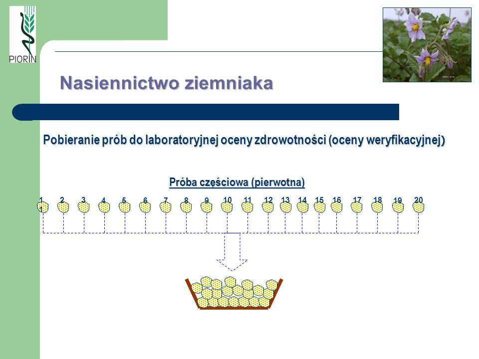 Próba częściowa (pierwotna) 1 23 456 789 101112131415161718 19 20 Nasiennictwo ziemniaka Pobieranie prób do laboratoryjnej oceny zdrowotności (oceny w